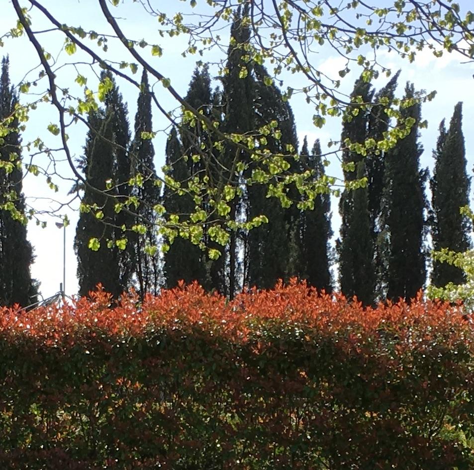 Fotografia di un giardino
