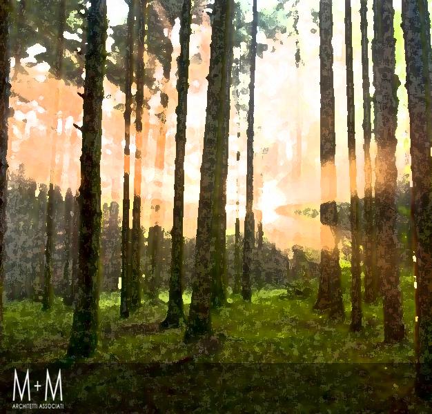 Fotografia di un bosco